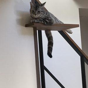 H様邸のキャットウォークで遊ぶ猫ちゃんの写真